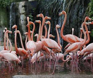 /imag/_v0/3000x2000/4/6/6/pinks-flamingos.jpg - 300x250