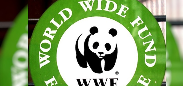 wwf635fundation.jpg