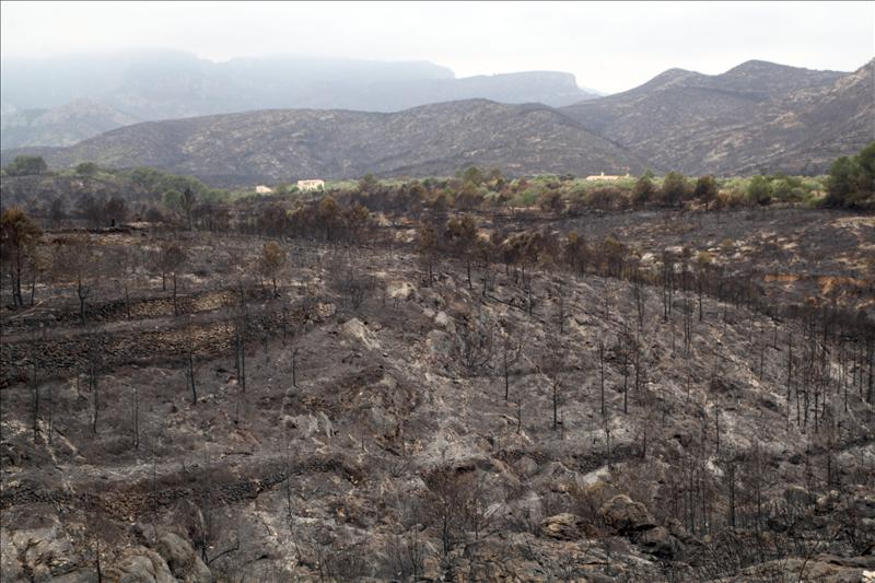 Bosques destruidos