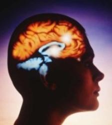 cerebro-12.jpg